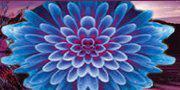 blue-flower