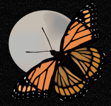 Butterfly_and_moon